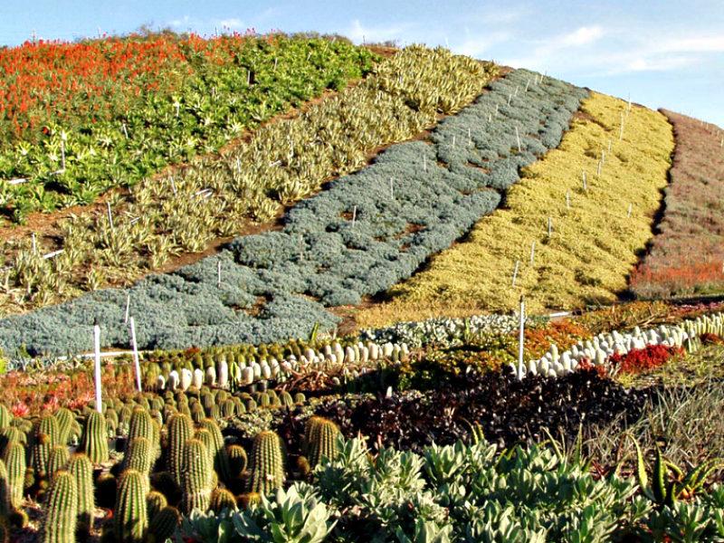 Growing Health at Altman Plants, Inc.