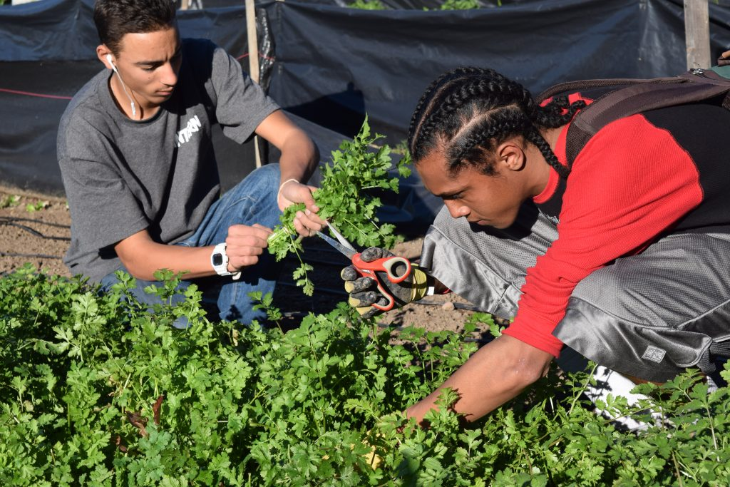 Participating Students at Second Chance Youth Garden, Encanto, San Diego